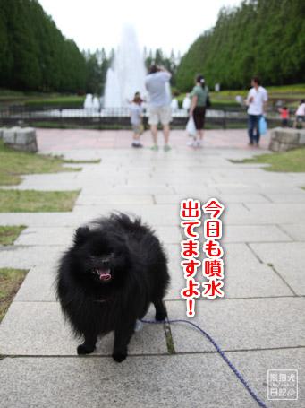 20110519_ほのぼの風景3