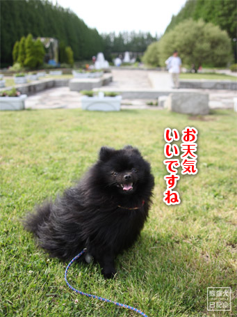 20110519_ほのぼの風景2