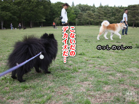 20110522_公園からの帰り1