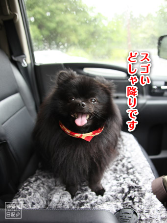 20110523_宮ヶ瀬3