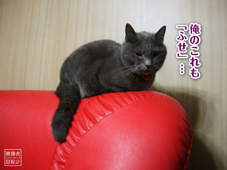 20110525_真熊5