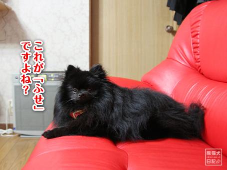20110525_真熊4