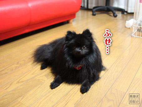 20110525_真熊2