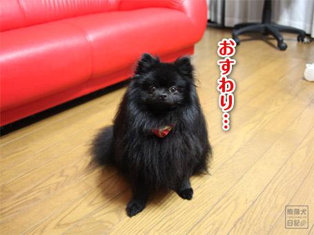 20110525_真熊1