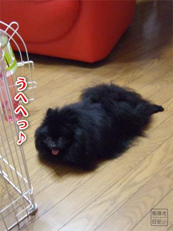 20110525_真熊3