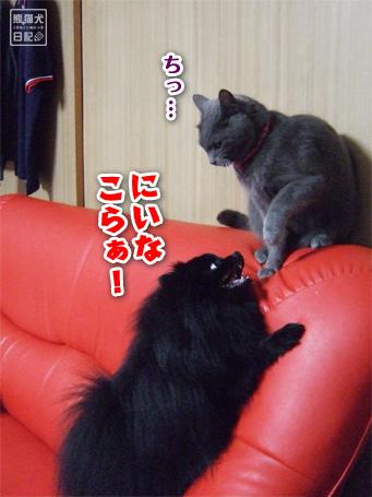 20110526_小競り合い2