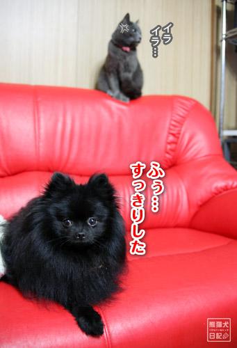 20110526_小競り合い5