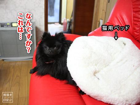 20110529_雨の日の真熊3