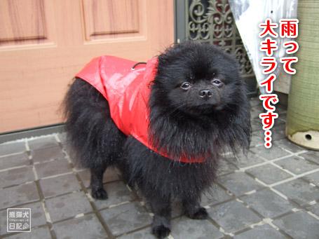 20110530_雨の散歩6
