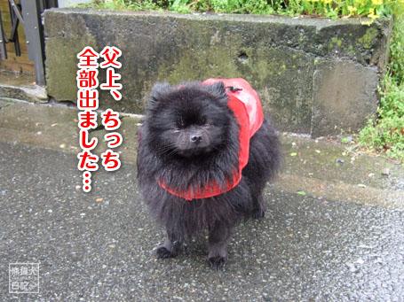 20110530_雨の散歩5