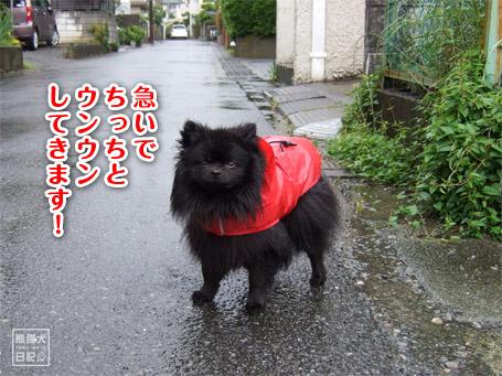 20110530_雨の散歩3