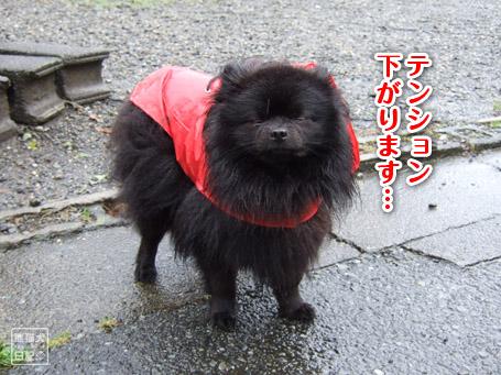 20110530_雨の散歩2