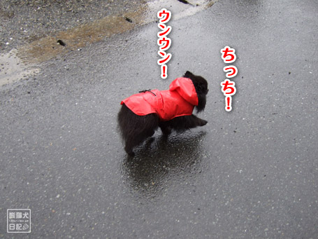 20110530_雨の散歩4