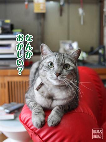 20110531_上向き寿喜6