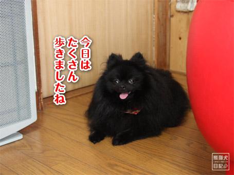 20110531_上向き寿喜7