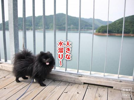 20110607_吊橋にて1
