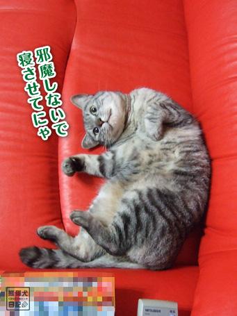20110610_仰向け猫5