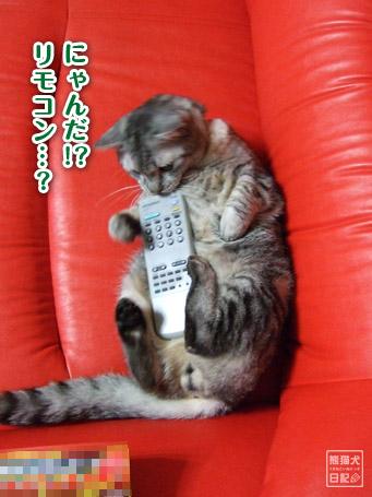 20110610_仰向け猫4
