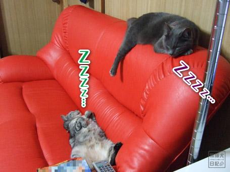 20110610_仰向け猫1