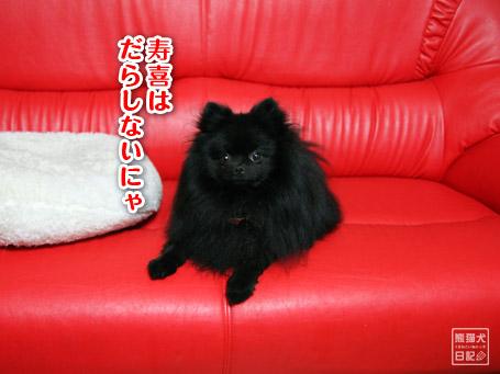 20110610_仰向け猫8