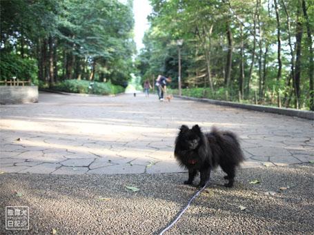 20110706_熊猫犬ペディア1