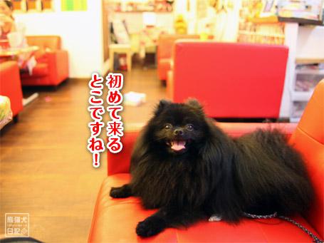 20110801_ドッグカフェ4