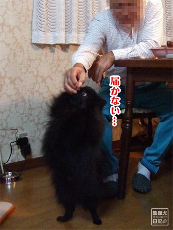 20111102_親父、真熊を溺愛5