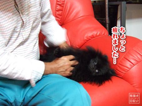 20111102_親父、真熊を溺愛6