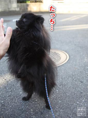 20111117_ものぐさタッチ4