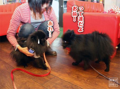 20111121_ニセ真熊3