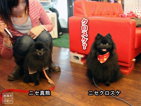 20111121_ニセ真熊4