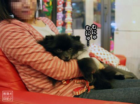 20111121_ニセ真熊8