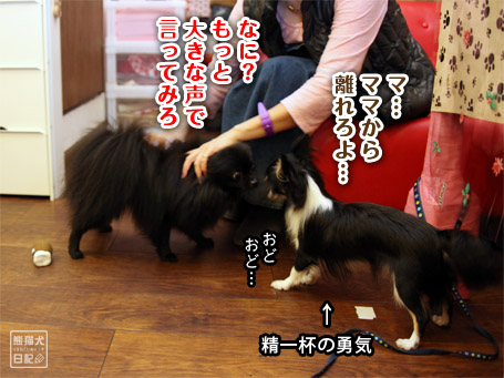 20111122_公家眉毛5