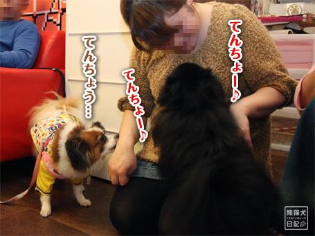 20111122_公家眉毛7