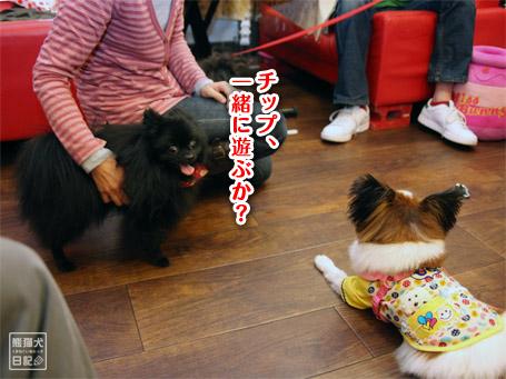20111122_公家眉毛10