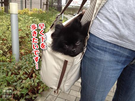 20111130_カディ邸レポート3
