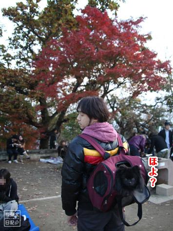 20111208_高尾山の頂上1