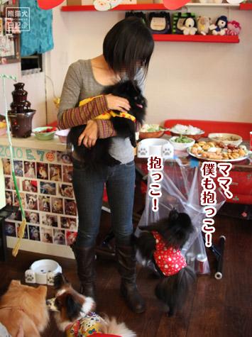 20111221_参加犬たち5