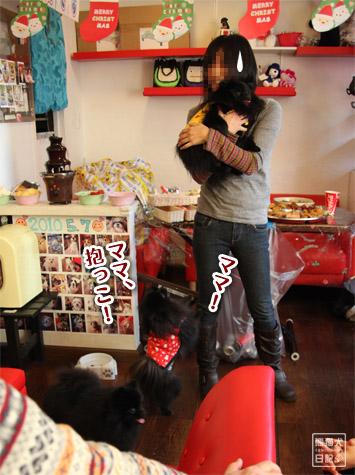 20111221_参加犬たち6