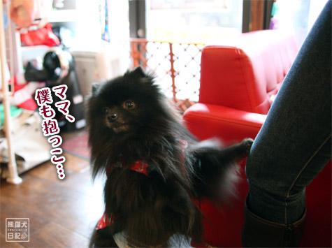20111221_参加犬たち4
