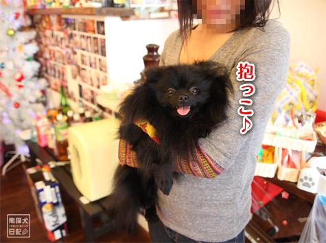 20111221_参加犬たち3