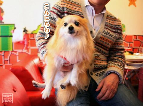 20111221_参加犬たち2