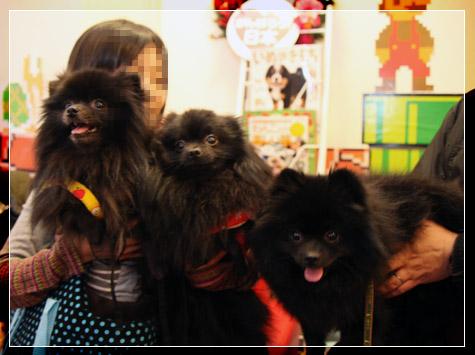 20111221_参加犬たち7