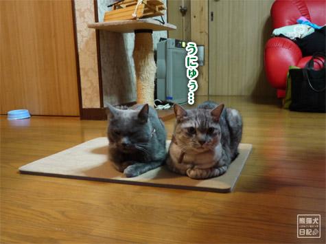 20111223_猫のイタズラ6