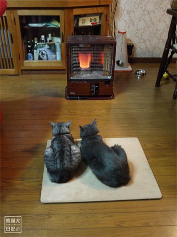 20111223_猫のイタズラ3