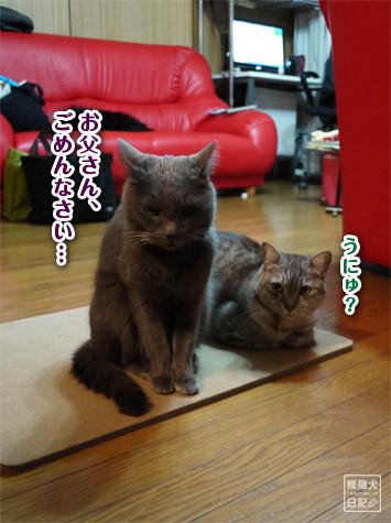 20111223_猫のイタズラ7