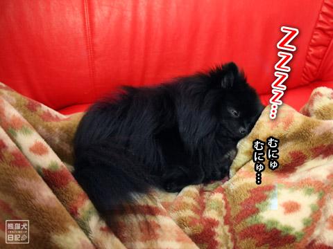 20120202_動物の寝顔4