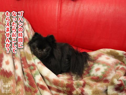 20120202_動物の寝姿7