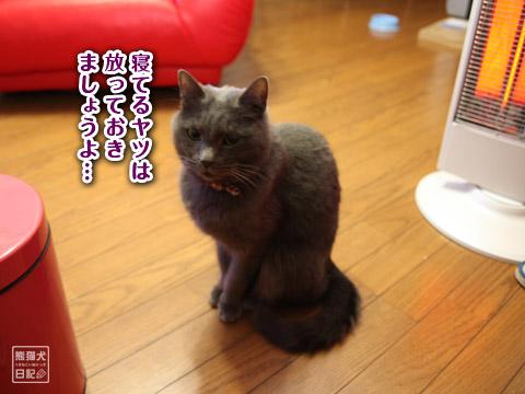 20120204_寿喜熟睡11