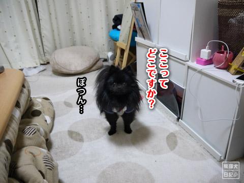 20120206_単身お泊りツアー2